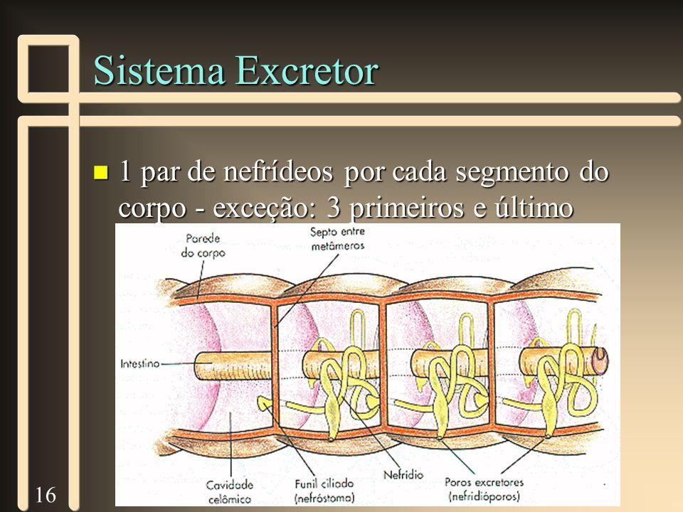 16 Sistema Excretor n 1 par de nefrídeos por cada segmento do corpo - exceção: 3 primeiros e último