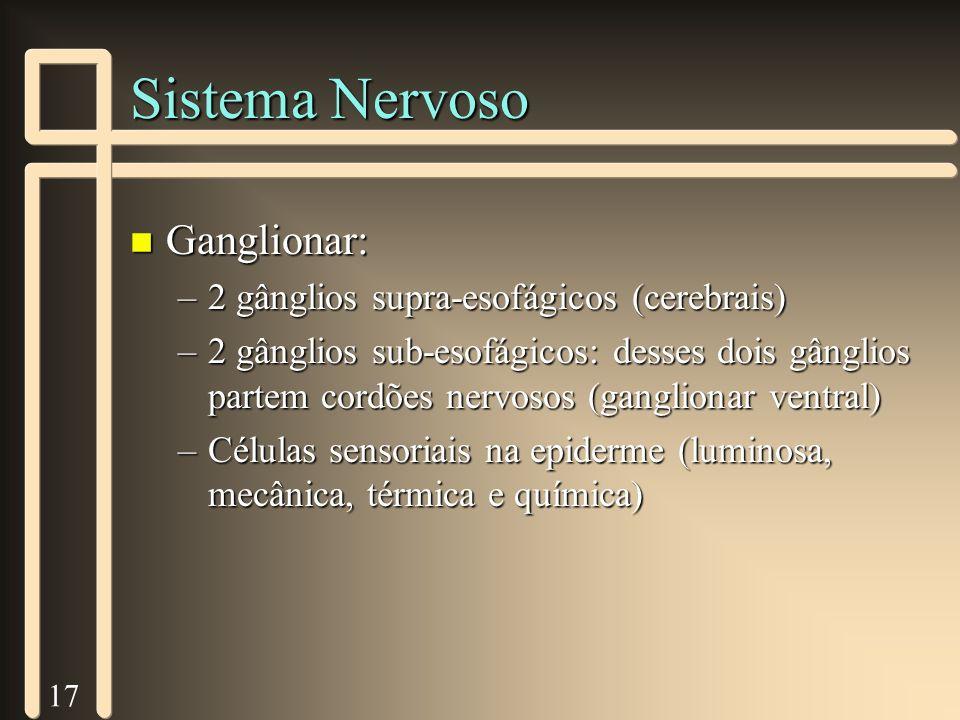 17 Sistema Nervoso n Ganglionar: –2 gânglios supra-esofágicos (cerebrais) –2 gânglios sub-esofágicos: desses dois gânglios partem cordões nervosos (ga