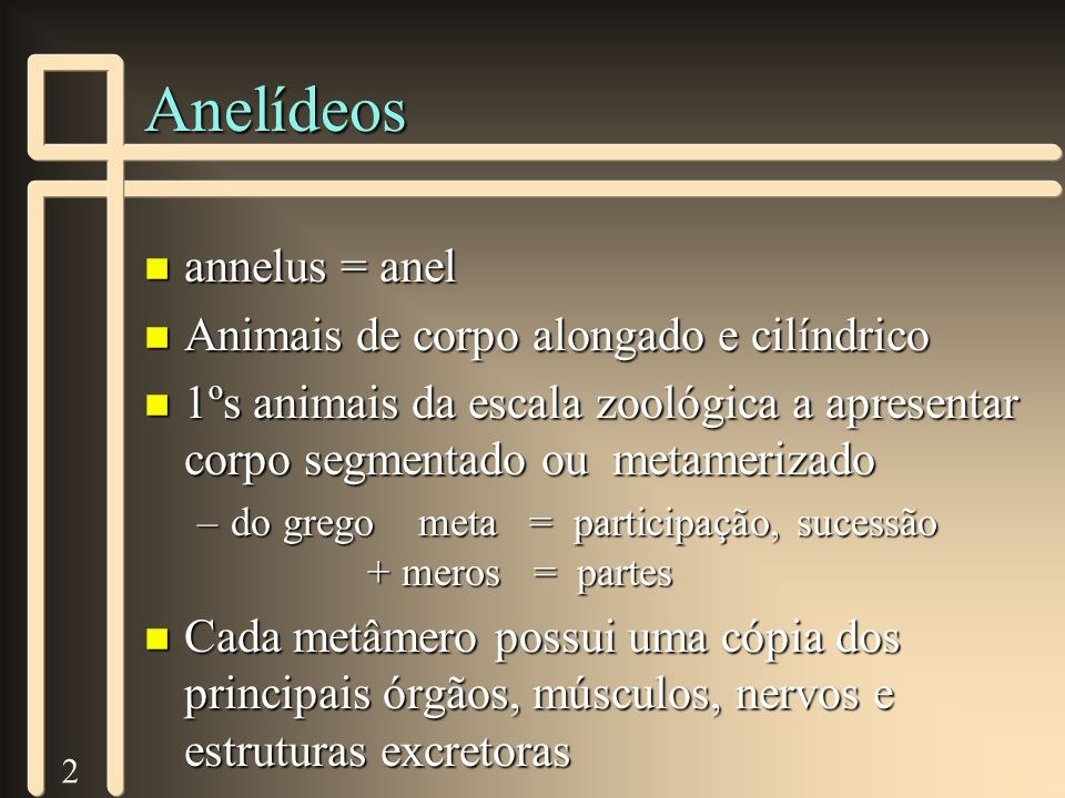 2 Anelídeos n annelus = anel n Animais de corpo alongado e cilíndrico n 1ºs animais da escala zoológica a apresentar corpo segmentado ou metamerizado