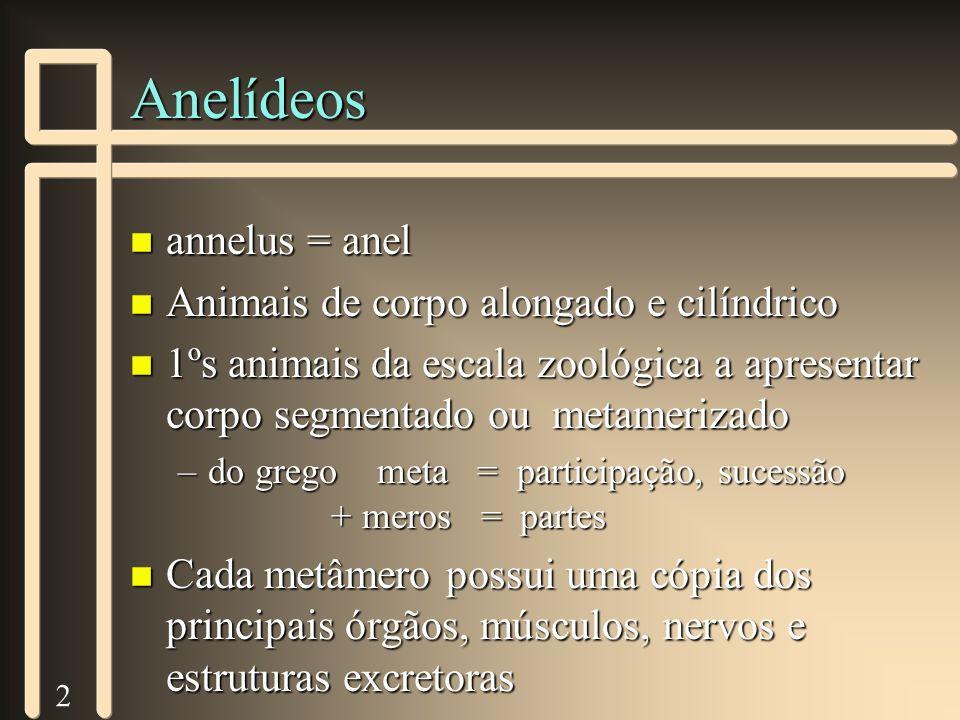 3 Anelídeos n Habitat: aquático ou terrestre