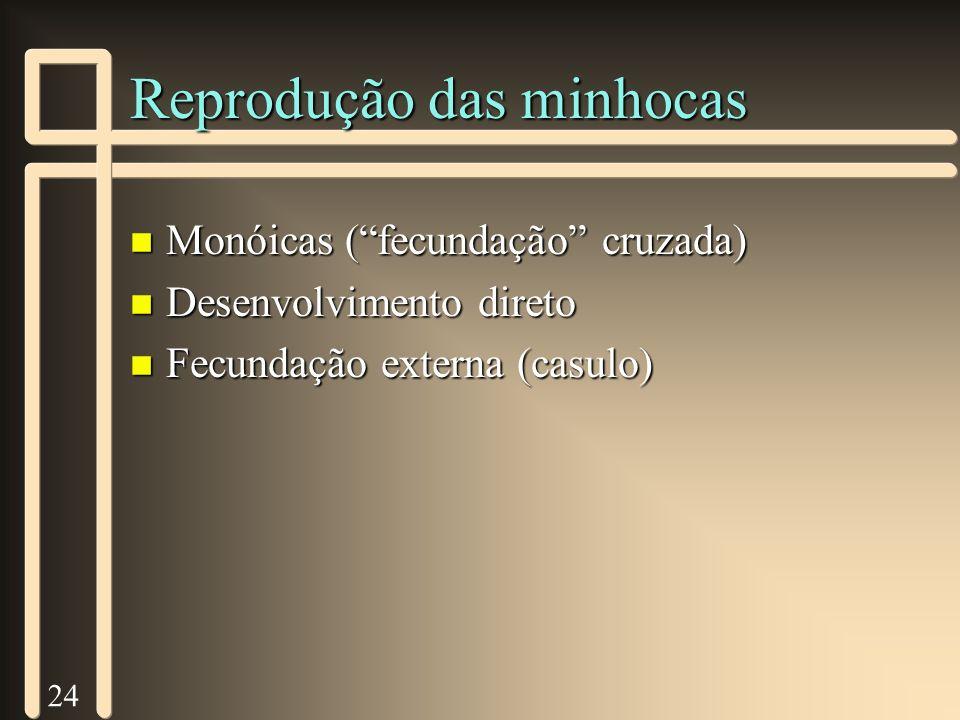 24 Reprodução das minhocas n Monóicas (fecundação cruzada) n Desenvolvimento direto n Fecundação externa (casulo)
