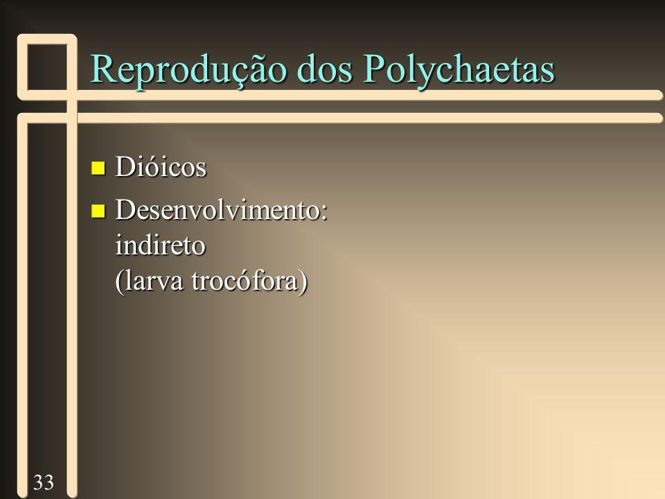 33 Reprodução dos Polychaetas n Dióicos n Desenvolvimento: indireto (larva trocófora)