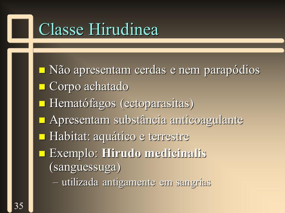 35 Classe Hirudinea n Não apresentam cerdas e nem parapódios n Corpo achatado n Hematófagos (ectoparasitas) n Apresentam substância anticoagulante n H