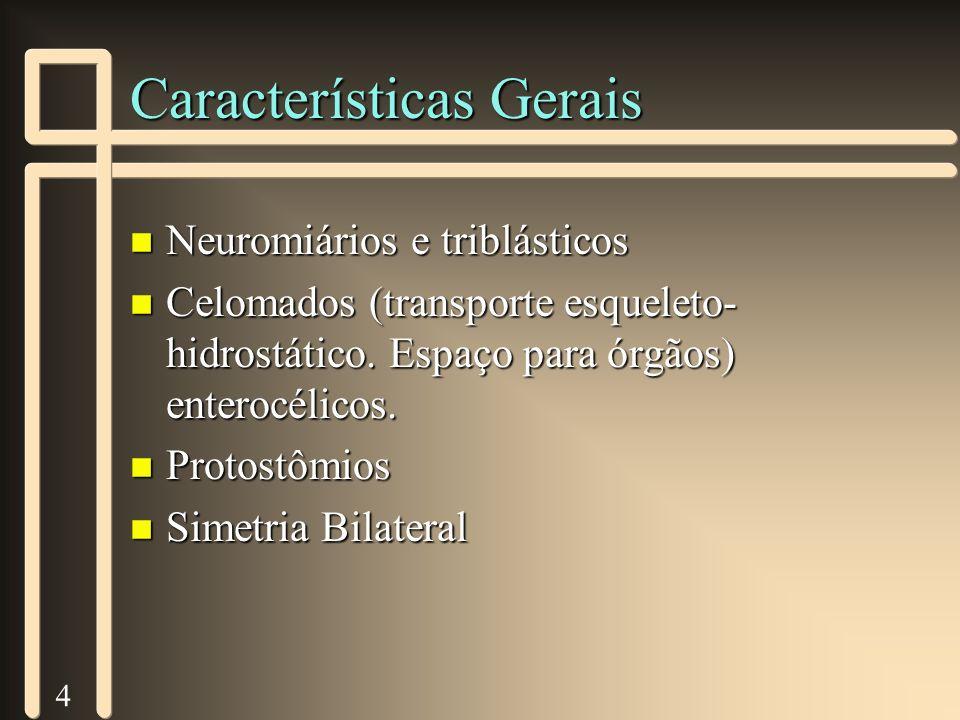4 Características Gerais n Neuromiários e triblásticos n Celomados (transporte esqueleto- hidrostático. Espaço para órgãos) enterocélicos. n Protostôm