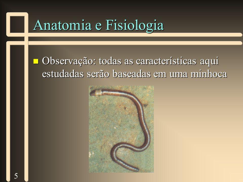 5 Anatomia e Fisiologia n Observação: todas as características aqui estudadas serão baseadas em uma minhoca