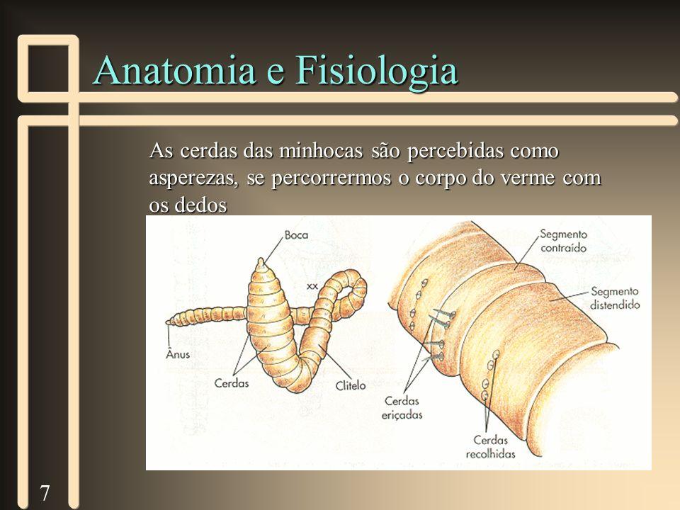 8 Sistema Digestivo n Completo - boca e ânus n Digestão Extracelular n Tiflossole n Cecos pilóricos