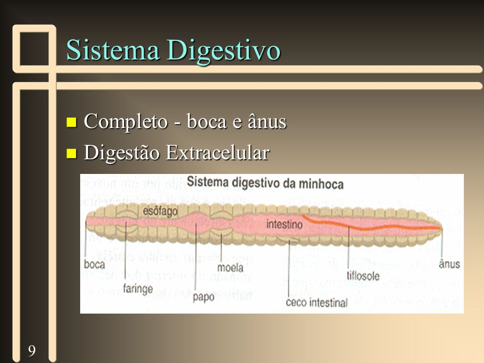 9 Sistema Digestivo n Completo - boca e ânus n Digestão Extracelular