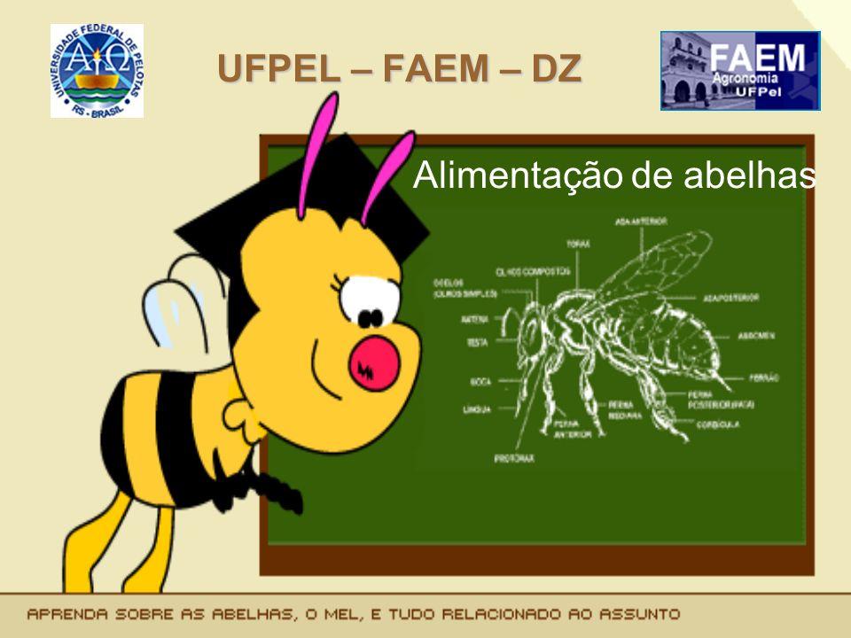 UFPEL – FAEM – DZ Alimentação de abelhas