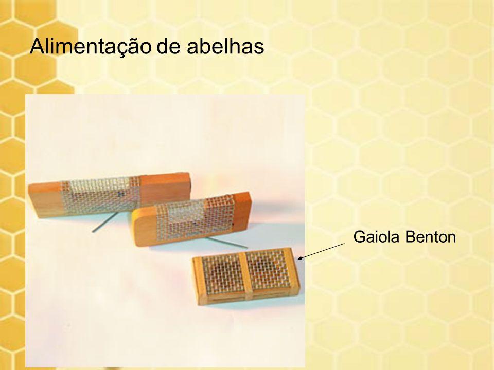 Alimentação de abelhas Gaiola Benton