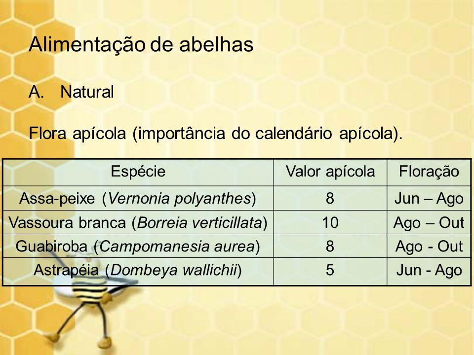 Alimentação de abelhas A.Natural Flora apícola (importância do calendário apícola). EspécieValor apícolaFloração Assa-peixe (Vernonia polyanthes)8Jun