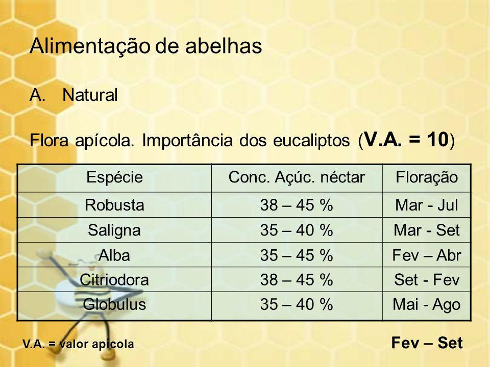 Alimentação de abelhas A.Natural Flora apícola. Importância dos eucaliptos ( V.A. = 10 ) EspécieConc. Açúc. néctarFloração Robusta38 – 45 %Mar - Jul S