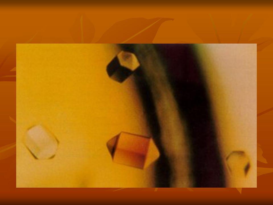 Estoques Bactérias Bactérias Glicerol 50% -20°C Glicerol 50% -20°C DMSO 50% -20°C DMSO 50% -20°C Fungos Fungos Plugs de micélio e esporos em água 4°C Plugs de micélio e esporos em água 4°C Micélio em papel de filtro –20°C Micélio em papel de filtro –20°C Catalogação Catalogação