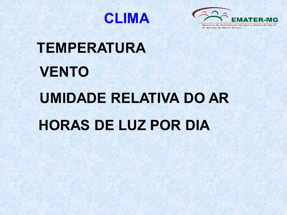 CLIMA TEMPERATURA VENTO UMIDADE RELATIVA DO AR HORAS DE LUZ POR DIA