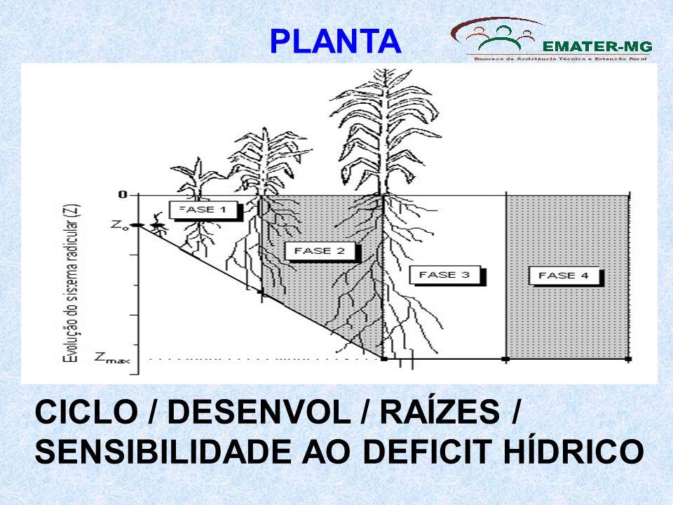 PLANTA CICLO / DESENVOL / RAÍZES / SENSIBILIDADE AO DEFICIT HÍDRICO