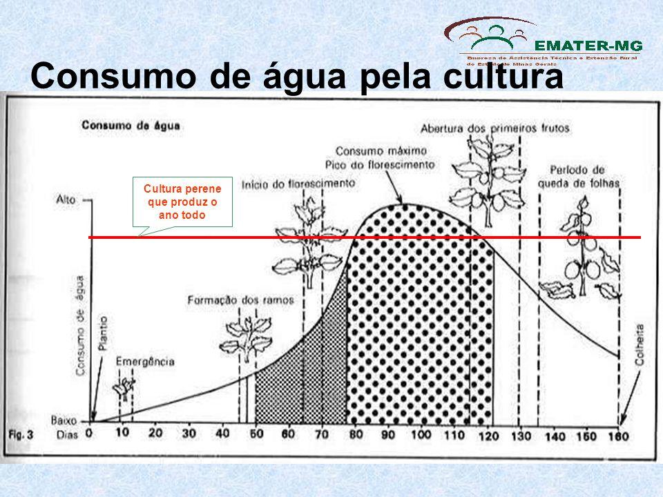 Consumo de água pela cultura Cultura perene que produz o ano todo