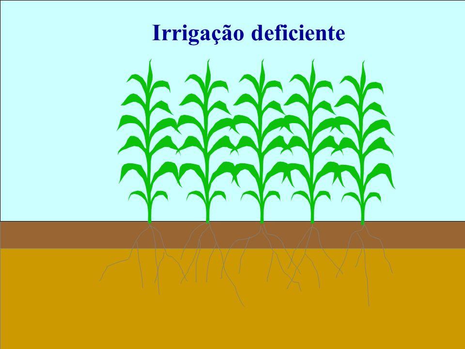 Irrigação deficiente