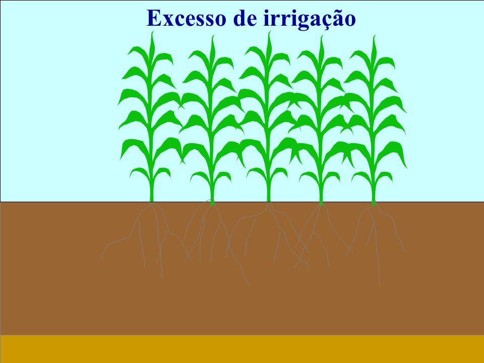 Excesso de irrigação