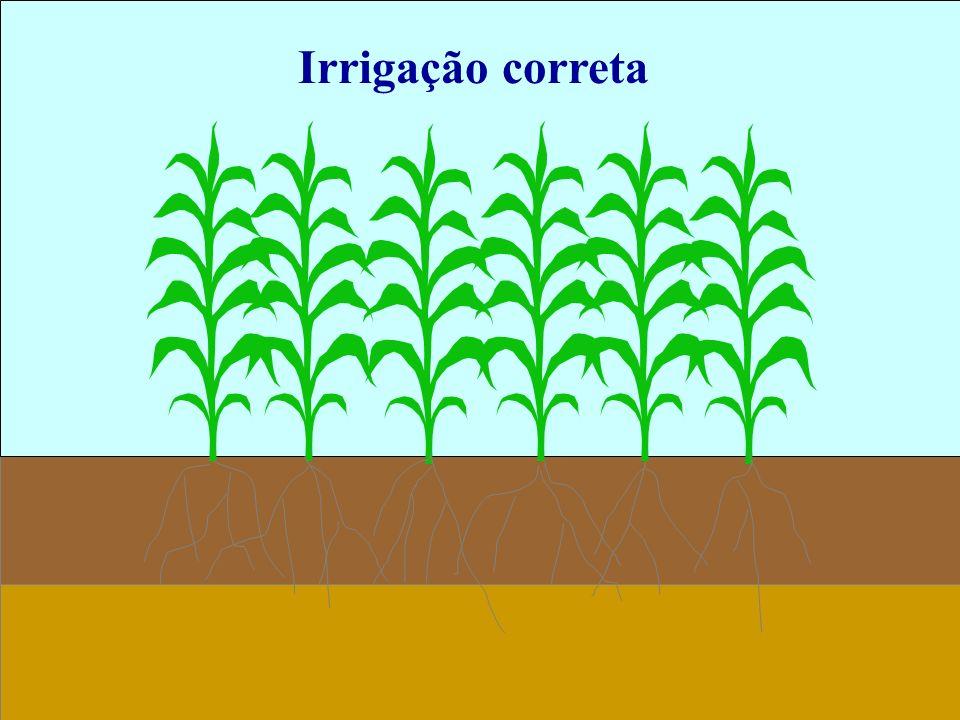 Irrigação correta