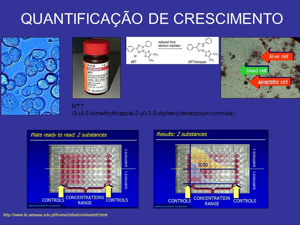 QUANTIFICAÇÃO DE CRESCIMENTO MTT (3-(4,5-dimethylthiazole-2-yl)-2,5-diphenyl tetrazolium bromide) http://www.ib.amwaw.edu.pl/home/dslado/video/mtt.htm