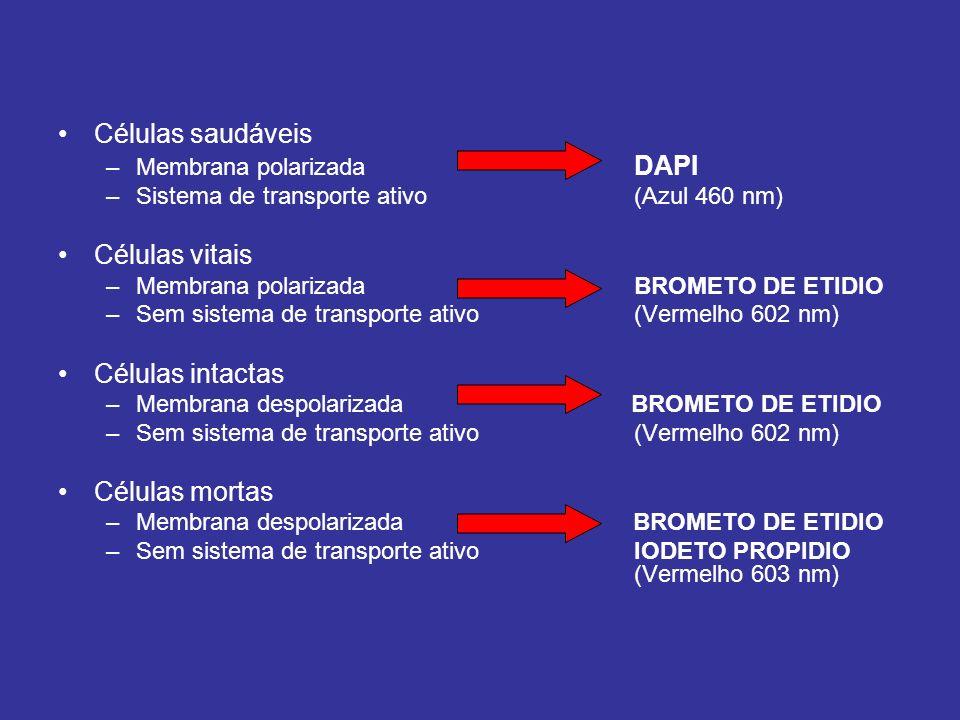 Células saudáveis –Membrana polarizada DAPI –Sistema de transporte ativo (Azul 460 nm) Células vitais –Membrana polarizadaBROMETO DE ETIDIO –Sem siste