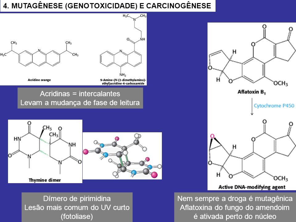 Acridinas = intercalantes Levam a mudança de fase de leitura Dímero de pirimidina Lesão mais comum do UV curto (fotoliase) Nem sempre a droga é mutagê
