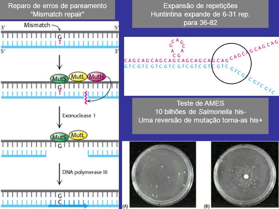 Reparo de erros de pareamento Mismatch repair Teste de AMES 10 bilhões de Salmonella his- Uma reversão de mutação torna-as his+ Expansão de repetições