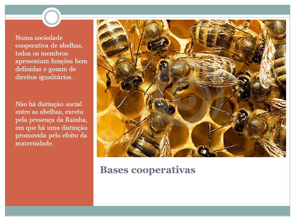 Bases cooperativas Numa sociedade cooperativa de abelhas, todos os membros apresentam funções bem definidas e gozam de direitos igualitários. Não há d