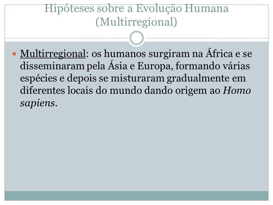 Hipóteses sobre a Evolução Humana (Multirregional) Multirregional: os humanos surgiram na África e se disseminaram pela Ásia e Europa, formando várias