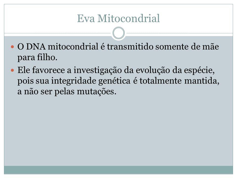 Eva Mitocondrial O DNA mitocondrial é transmitido somente de mãe para filho. Ele favorece a investigação da evolução da espécie, pois sua integridade