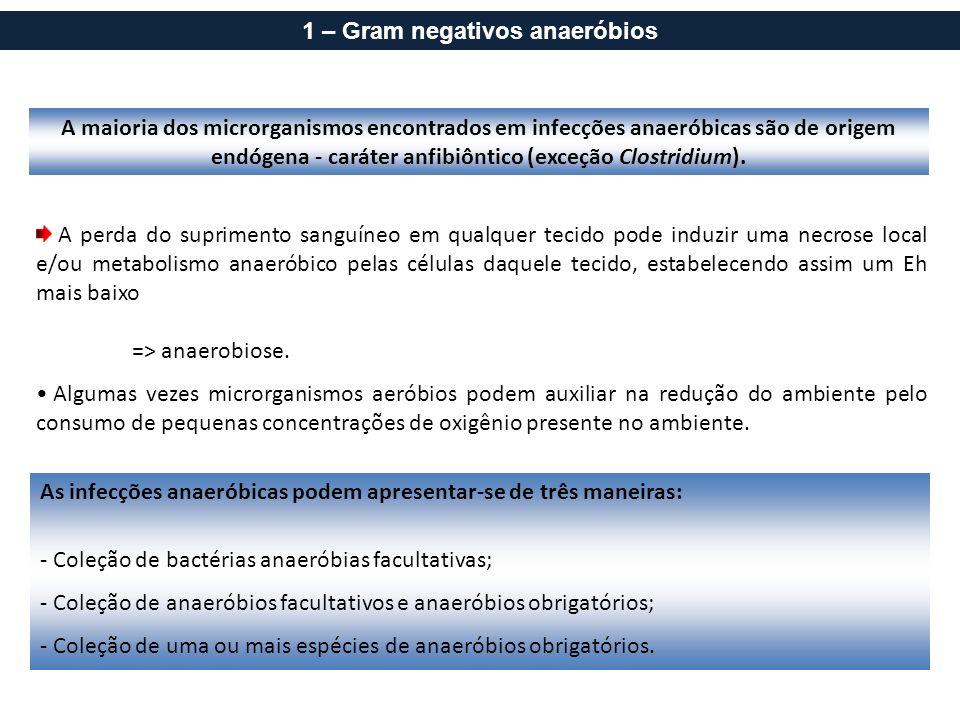 A maioria dos microrganismos encontrados em infecções anaeróbicas são de origem endógena - caráter anfibiôntico (exceção Clostridium). A perda do supr