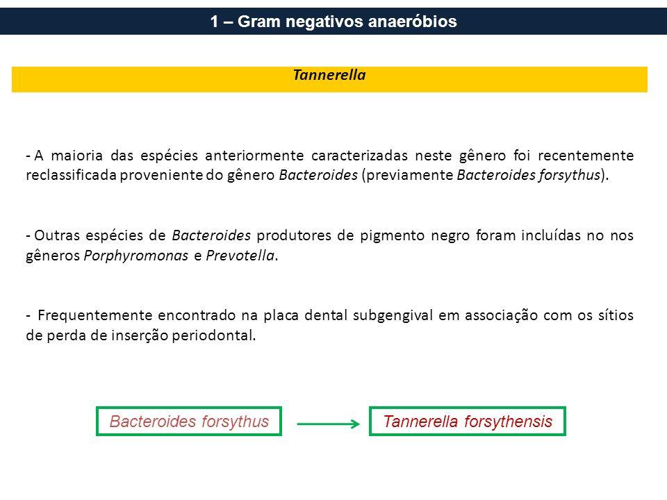 Tannerella - A maioria das espécies anteriormente caracterizadas neste gênero foi recentemente reclassificada proveniente do gênero Bacteroides (previ