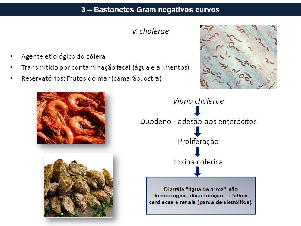 V. cholerae Agente etiológico do cólera Transmitido por contaminação fecal (água e alimentos) Reservatórios: Frutos do mar (camarão, ostra) 3 – Baston