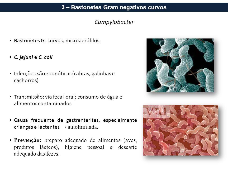 Campylobacter Bastonetes G- curvos, microaerófilos. C. jejuni e C. coli Infecções são zoonóticas (cabras, galinhas e cachorros) Transmissão: via fecal
