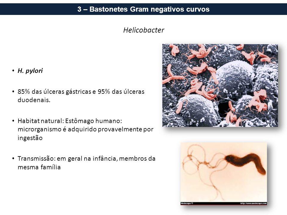 Helicobacter H. pylori 85% das úlceras gástricas e 95% das úlceras duodenais. Habitat natural: Estômago humano: microrganismo é adquirido provavelment