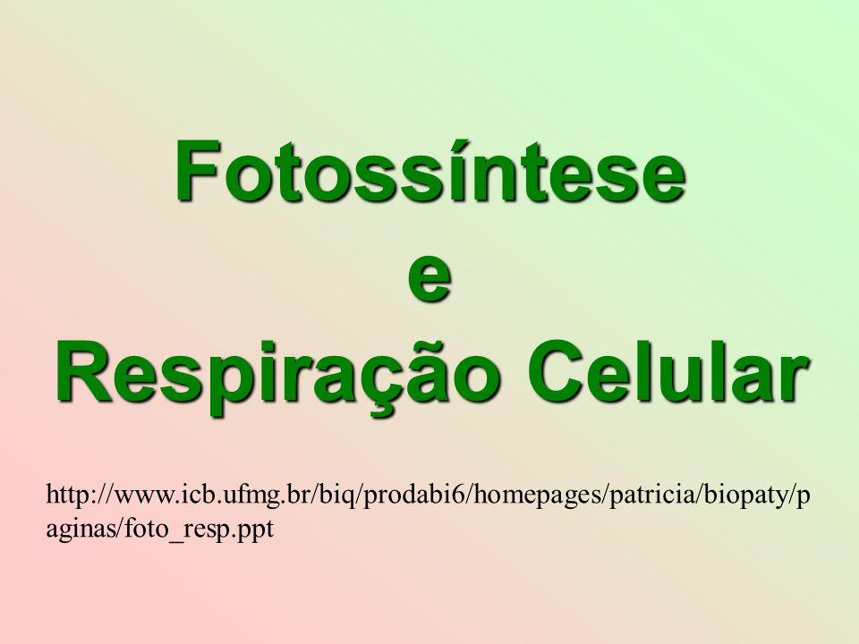 Fotossíntese e Respiração Celular http://www.icb.ufmg.br/biq/prodabi6/homepages/patricia/biopaty/p aginas/foto_resp.ppt