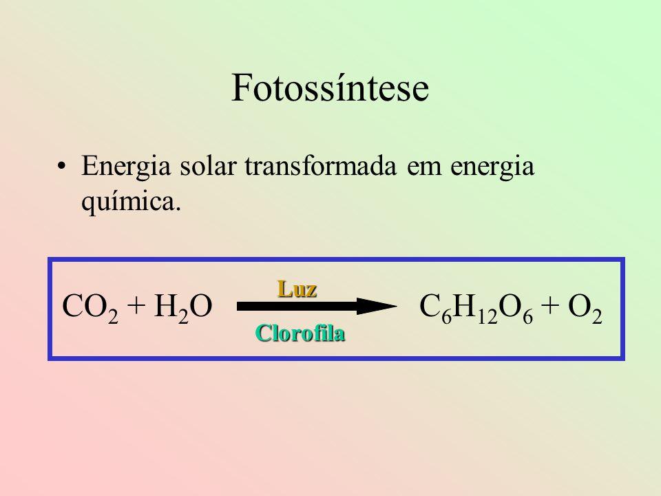 Fotossíntese Energia solar transformada em energia química. CO 2 + H 2 O C 6 H 12 O 6 + O 2 Luz Clorofila