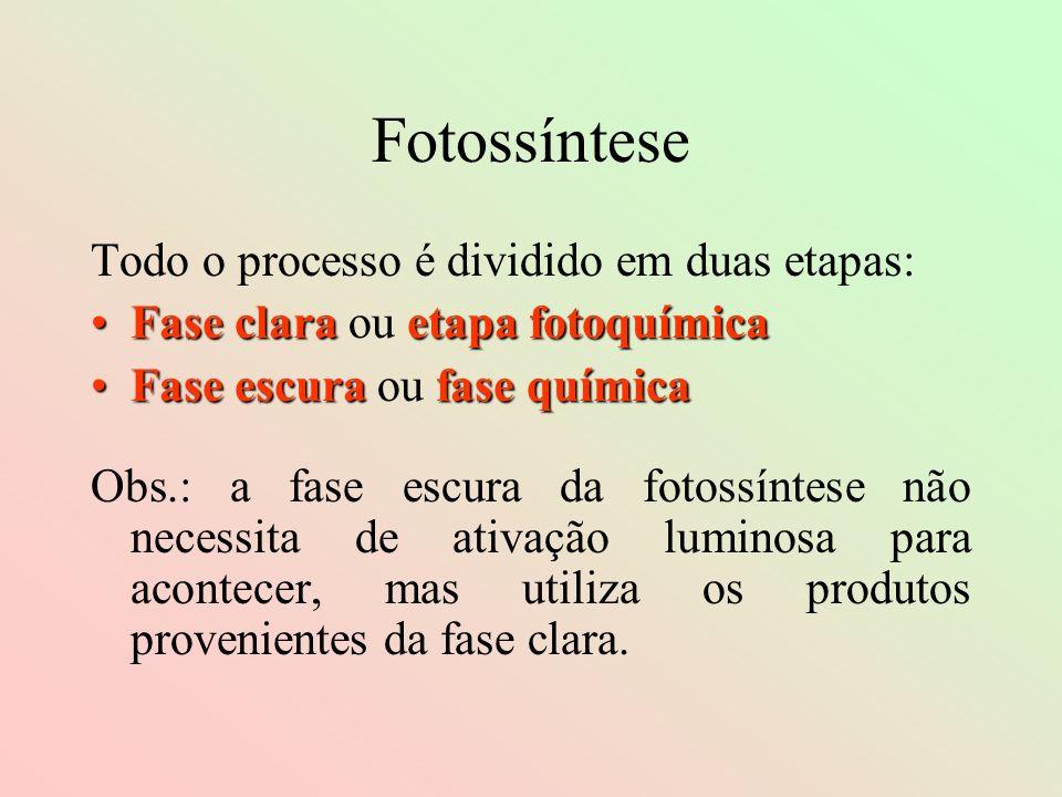 Fotossíntese Todo o processo é dividido em duas etapas: Fase clara etapa fotoquímicaFase clara ou etapa fotoquímica Fase escura fase químicaFase escur