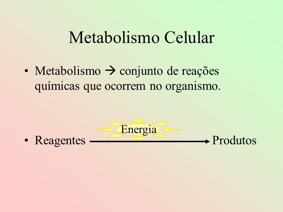 Fotossíntese Todo o processo é dividido em duas etapas: Fase clara etapa fotoquímicaFase clara ou etapa fotoquímica Fase escura fase químicaFase escura ou fase química Obs.: a fase escura da fotossíntese não necessita de ativação luminosa para acontecer, mas utiliza os produtos provenientes da fase clara.
