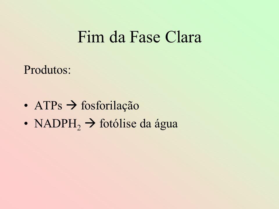 Fim da Fase Clara Produtos: ATPs fosforilação NADPH 2 fotólise da água