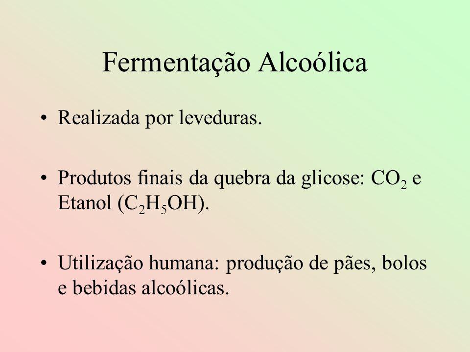 Fermentação Alcoólica Realizada por leveduras. Produtos finais da quebra da glicose: CO 2 e Etanol (C 2 H 5 OH). Utilização humana: produção de pães,