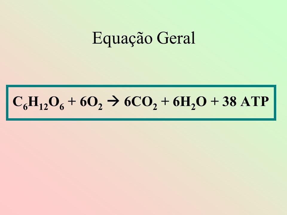 Equação Geral C 6 H 12 O 6 + 6O 2 6CO 2 + 6H 2 O + 38 ATP