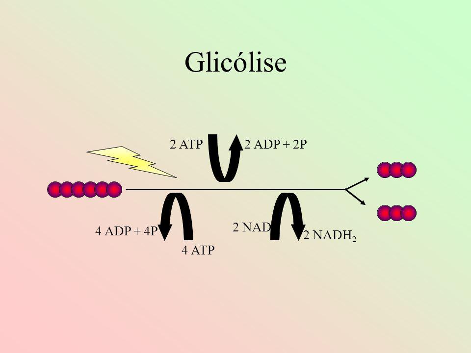 Glicólise 2 ATP2 ADP + 2P 4 ATP 4 ADP + 4P 2 NAD 2 NADH 2