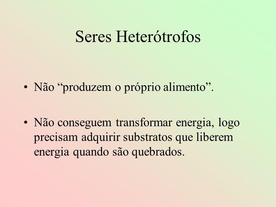 Seres Heterótrofos Não produzem o próprio alimento. Não conseguem transformar energia, logo precisam adquirir substratos que liberem energia quando sã