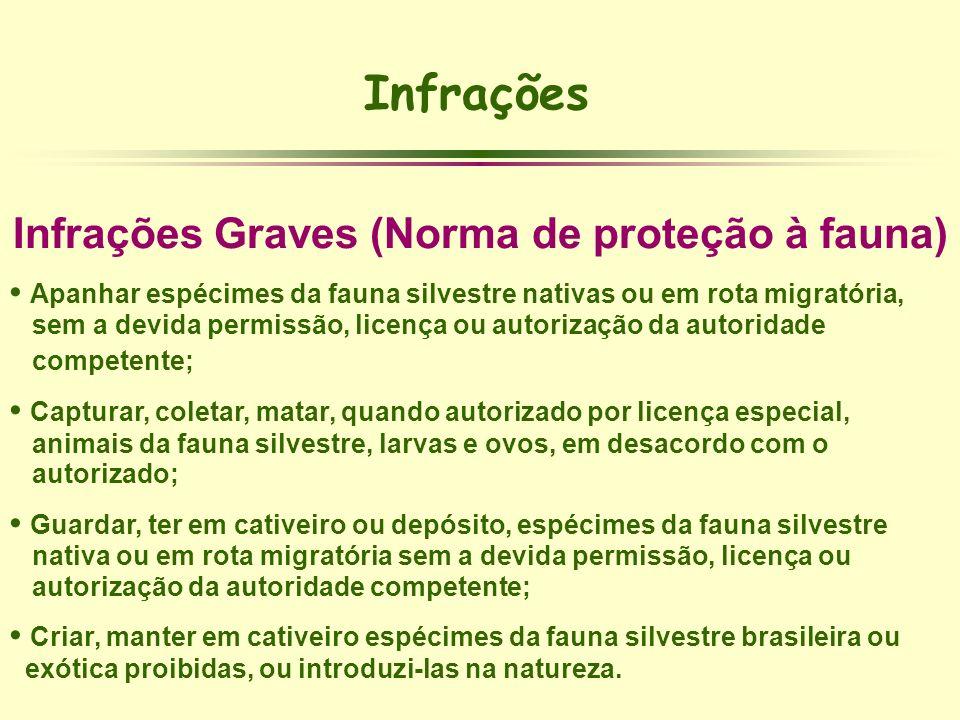Infrações Infrações Graves (Norma de proteção à fauna) Apanhar espécimes da fauna silvestre nativas ou em rota migratória, sem a devida permissão, lic