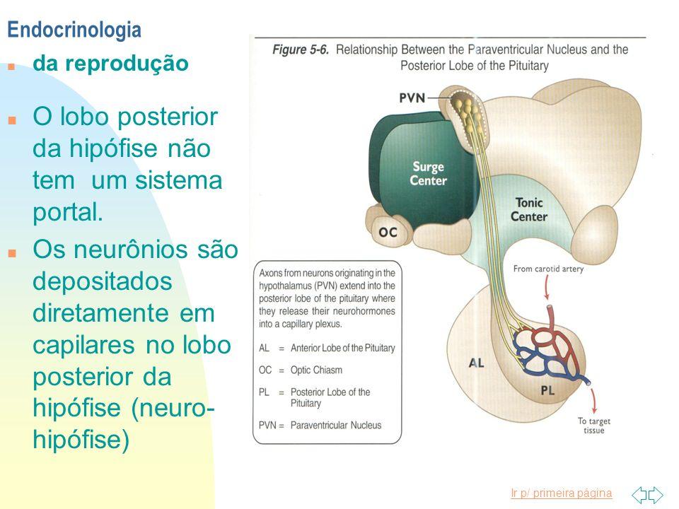 Ir p/ primeira página n O lobo posterior da hipófise não tem um sistema portal. n Os neurônios são depositados diretamente em capilares no lobo poster