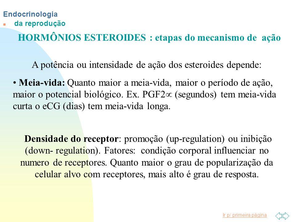 Ir p/ primeira página Endocrinologia n da reprodução HORMÔNIOS ESTEROIDES : etapas do mecanismo de ação A potência ou intensidade de ação dos esteroid