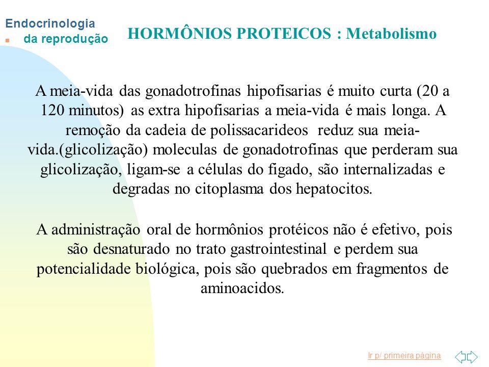 Ir p/ primeira página Endocrinologia n da reprodução HORMÔNIOS PROTEICOS : Metabolismo A meia-vida das gonadotrofinas hipofisarias é muito curta (20 a