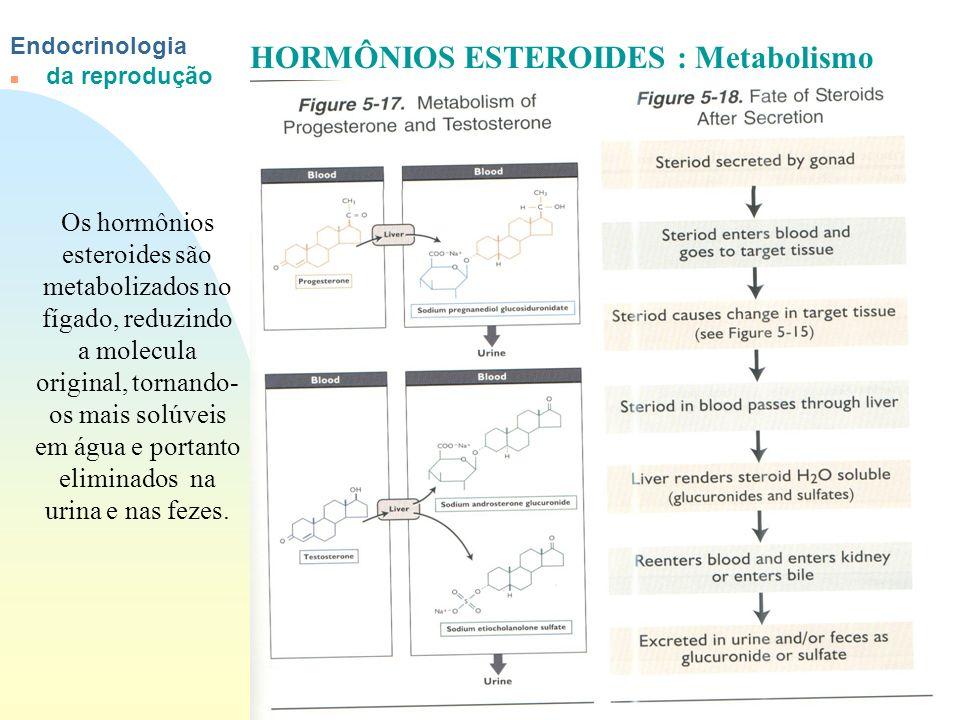 Ir p/ primeira página Endocrinologia n da reprodução HORMÔNIOS ESTEROIDES : Metabolismo Os hormônios esteroides são metabolizados no fígado, reduzindo