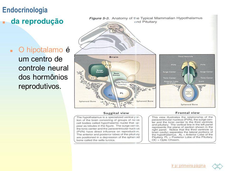Ir p/ primeira página n O hipotalamo é um centro de controle neural dos hormônios reprodutivos. Endocrinologia n da reprodução