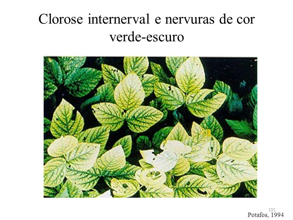 Clorose internerval e nervuras de cor verde-escuro 101 Potafos, 1994